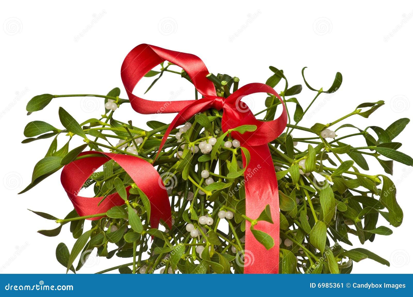 Bunch of mistletoe