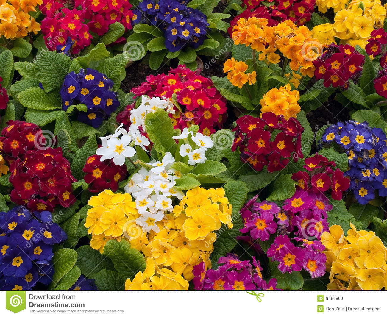 Bunch of multi colored flowers arranged together stock for Natural multi colored roses