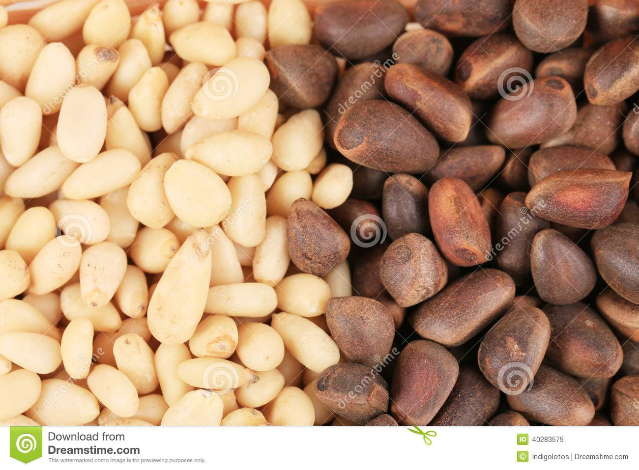 Bunch of pine nuts. Close up