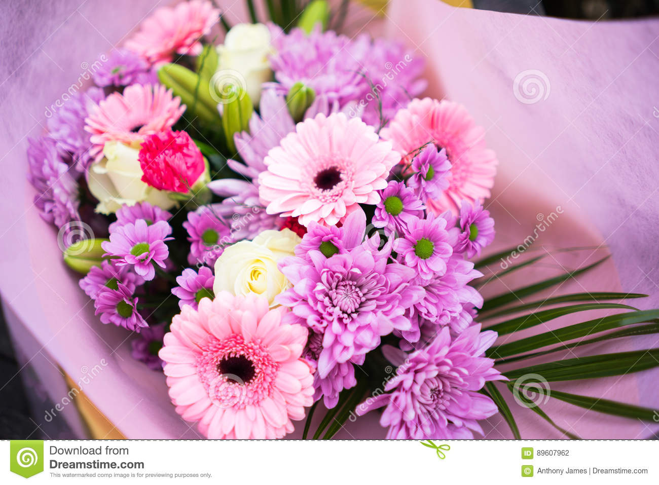 Bunch Of Pink Red And White Flowers Stock Photo Image Of Flower