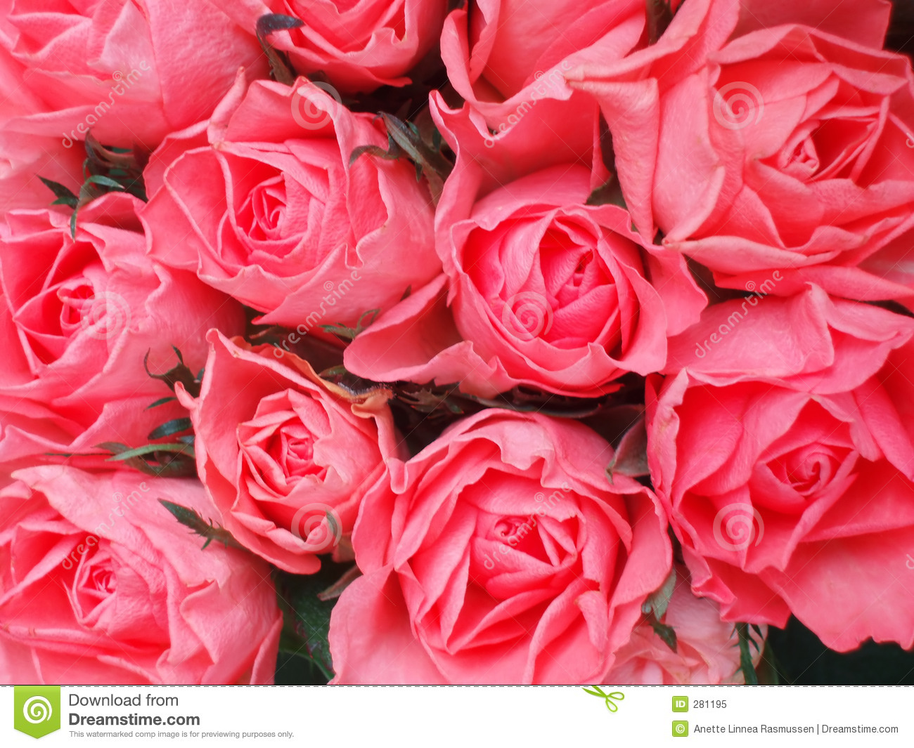 Bunch Of Pink Roses Stock Image Image Of Light Detail 281195