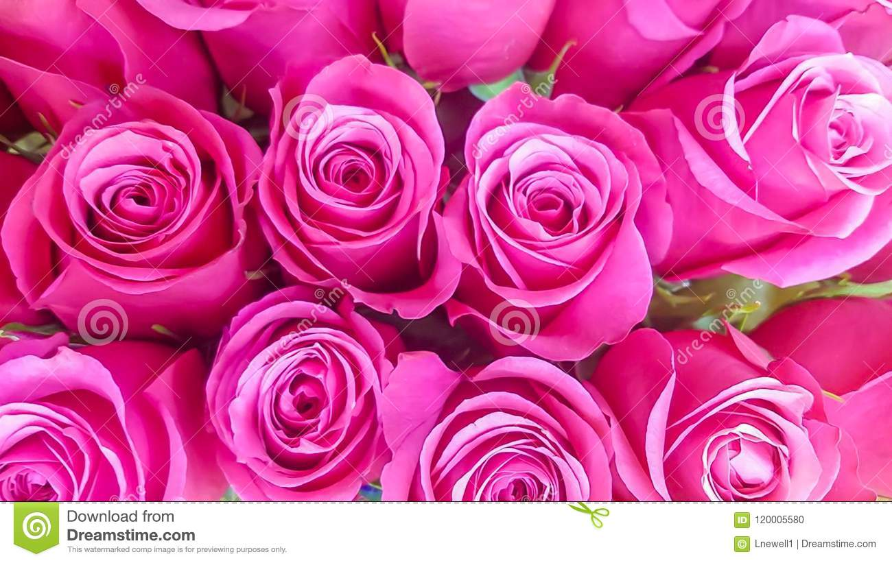 Bunch of pink roses bouquet background stock photo image of download bunch of pink roses bouquet background stock photo image of birthday meaning izmirmasajfo