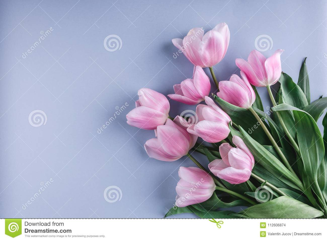 Bunch of pink tulip flowers on blue background. Waiting for spring. Happy Easter card.