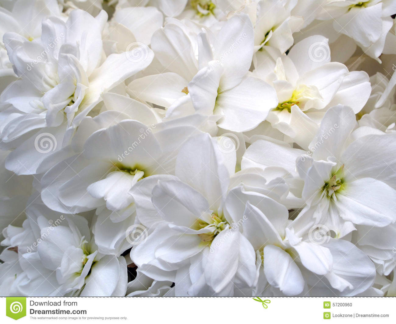White Pure Flowers Stock Image Image Of Flower Smell 952671