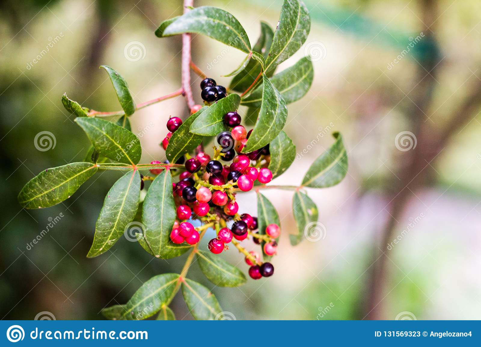 A bunch of red berries in a tree