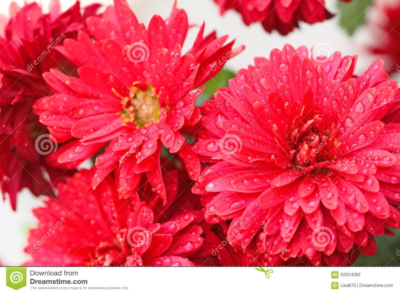 Tipi Di Fiori Rossi.Bunch Of Red Flowers Stock Photo Image Of Fall Bright 62024382
