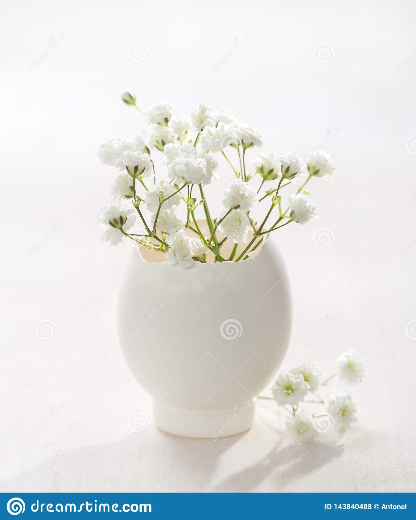 Bunch of white Baby`s Breath flowers Gypsophila in egg shell on the white wooden plank. Shallow depth of field, focus on near f