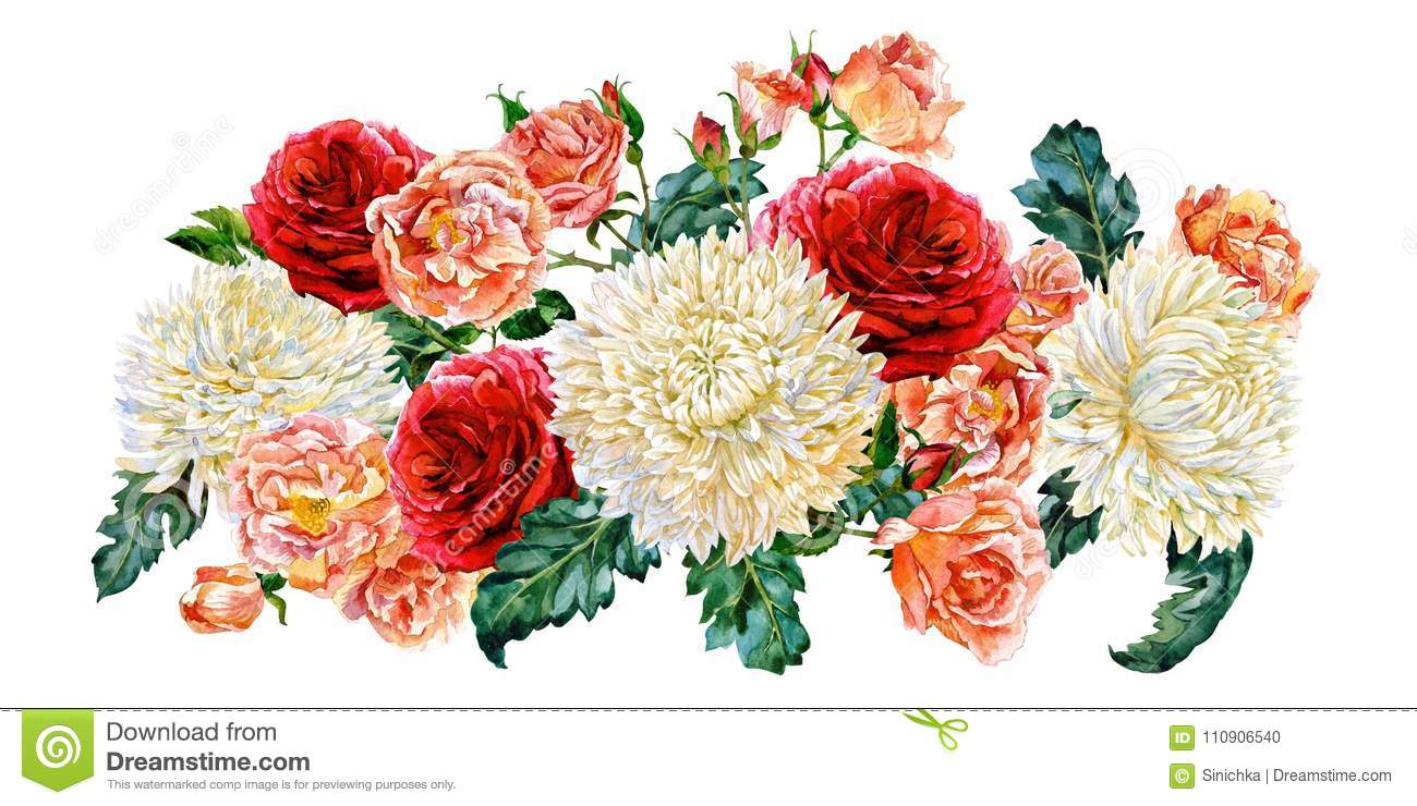 Bunch Of White Chrysanthemums And Roses. Watercolor. Stock ...