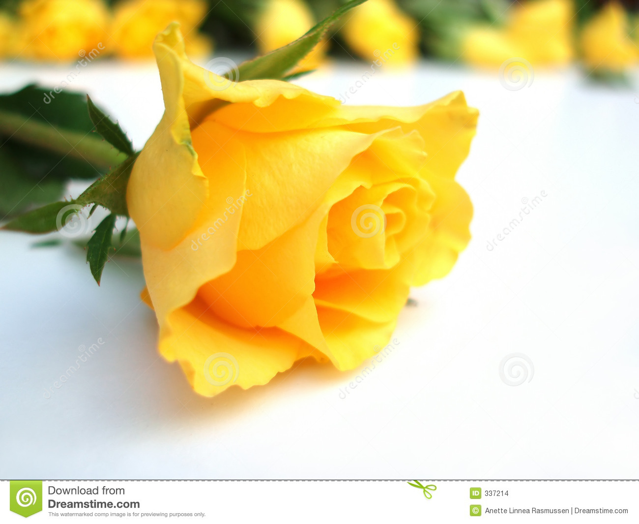 Bunch of yellow roses – one rose single