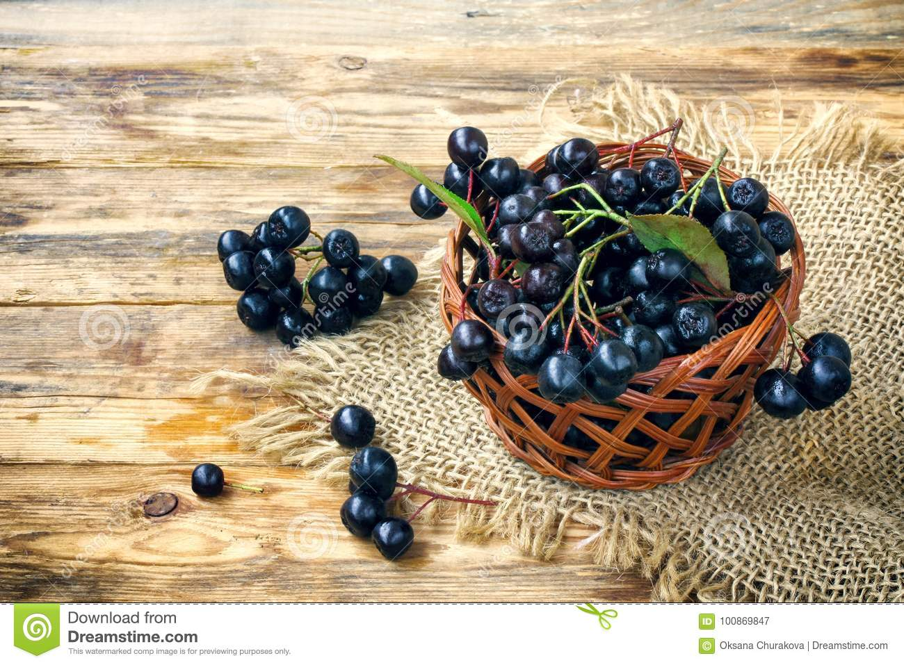 Bunches of chokeberry in wicker basket, burlap cloth