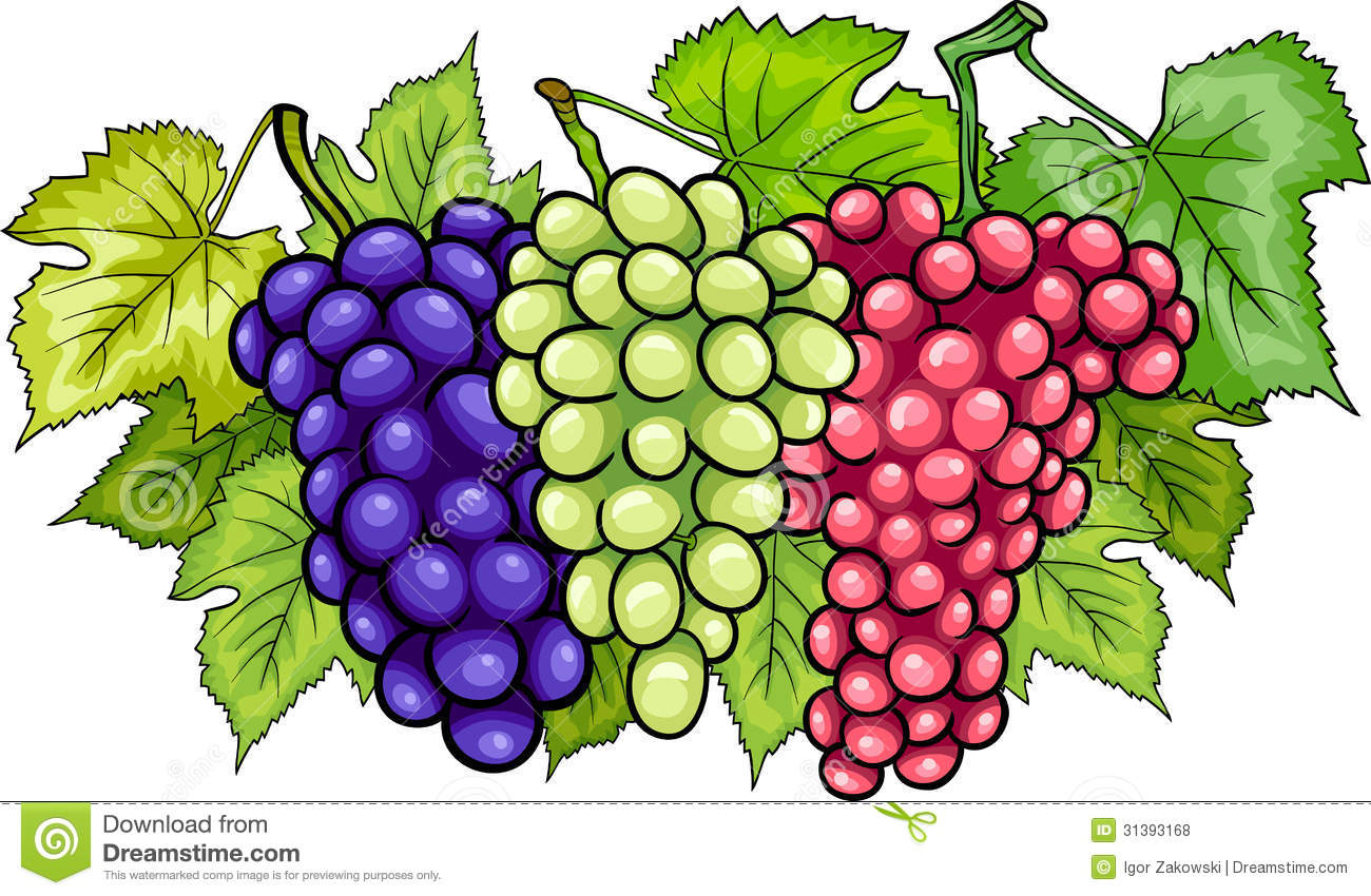 Bunches Of Grapes Cartoon Illustration Royalty Free Stock ...