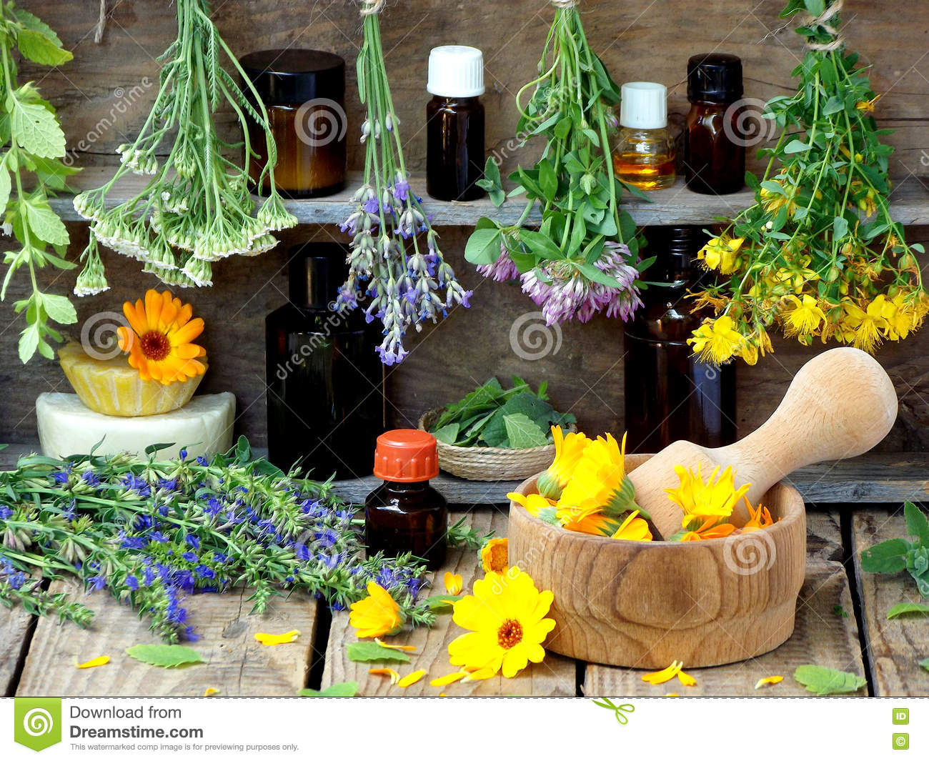 Bunches Of Healing Herbs - Mint, Yarrow, Lavender, Clover, Hyssop