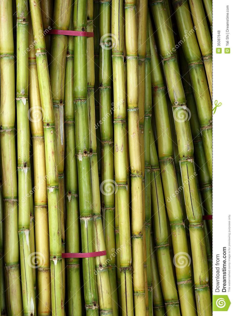 What is Sugar Cane? (with pictures) |Sugar Cane Stalks
