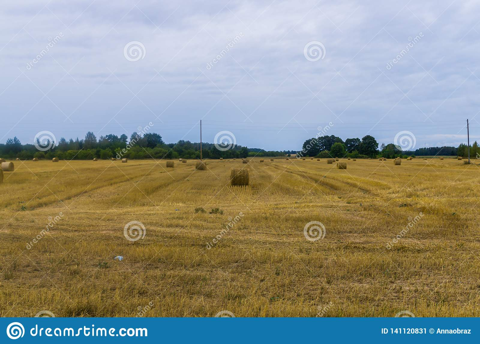 Bundles of hay rolls on the farmland, twisted hay in the field