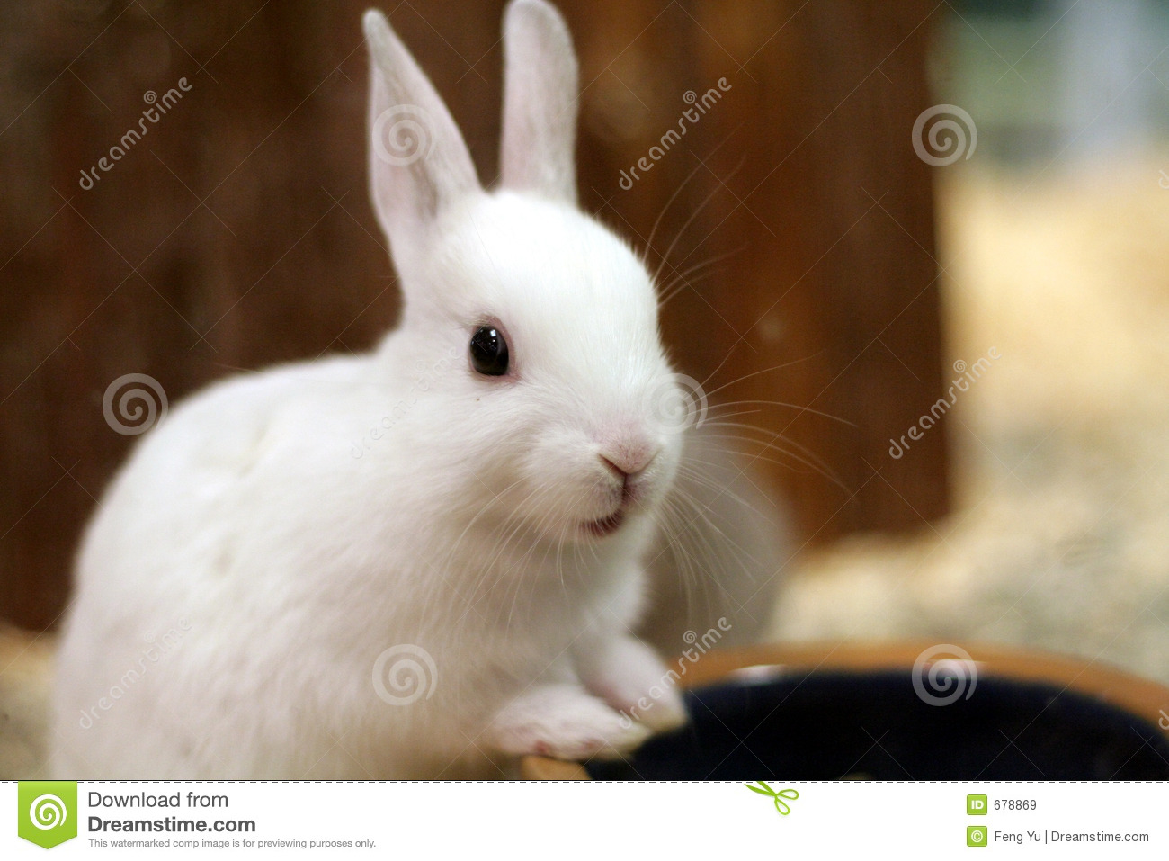 Bunny Stock Image Image Of Funny Bunny Rabbit Easter 678869