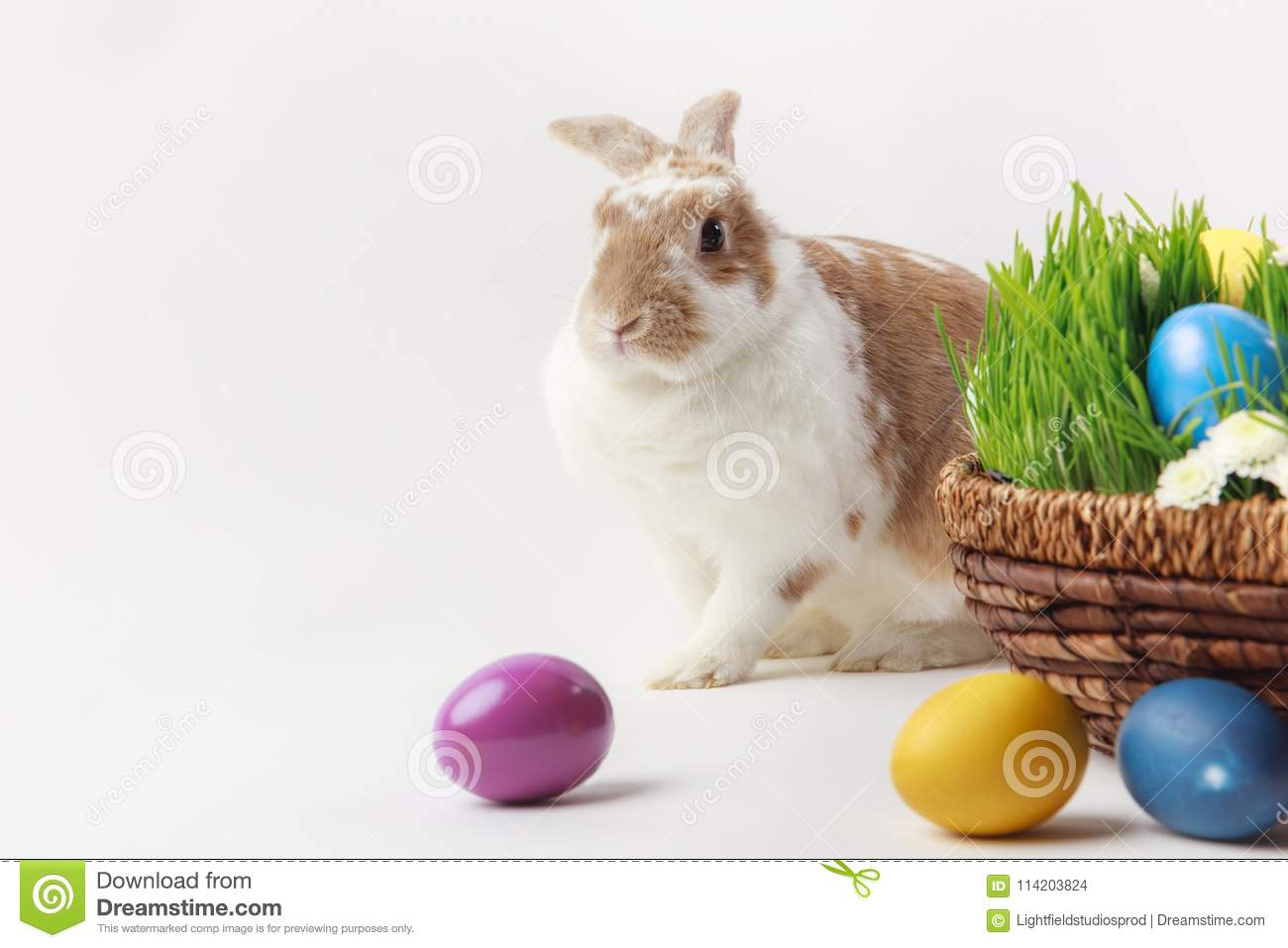 Bunny and basket with grass stems and easter eggs