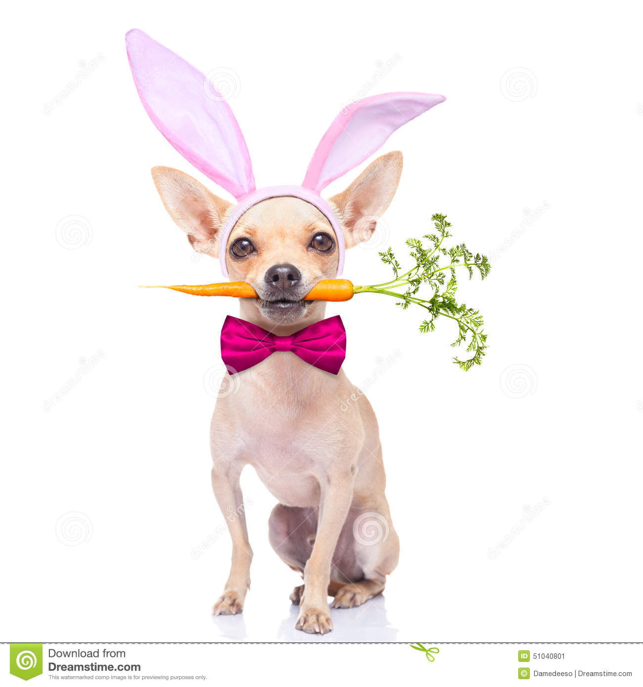 Dog With Bunny Ears In Mouth