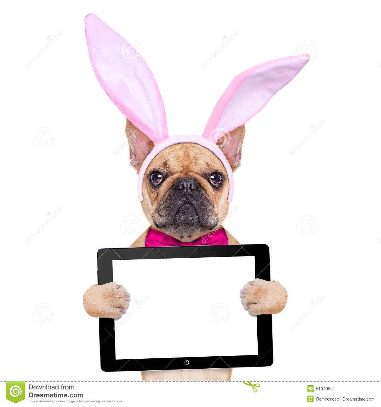 Bunny easter ears dog stock image image of blank carnival 51040521 download bunny easter ears dog stock image image of blank carnival 51040521 voltagebd Choice Image