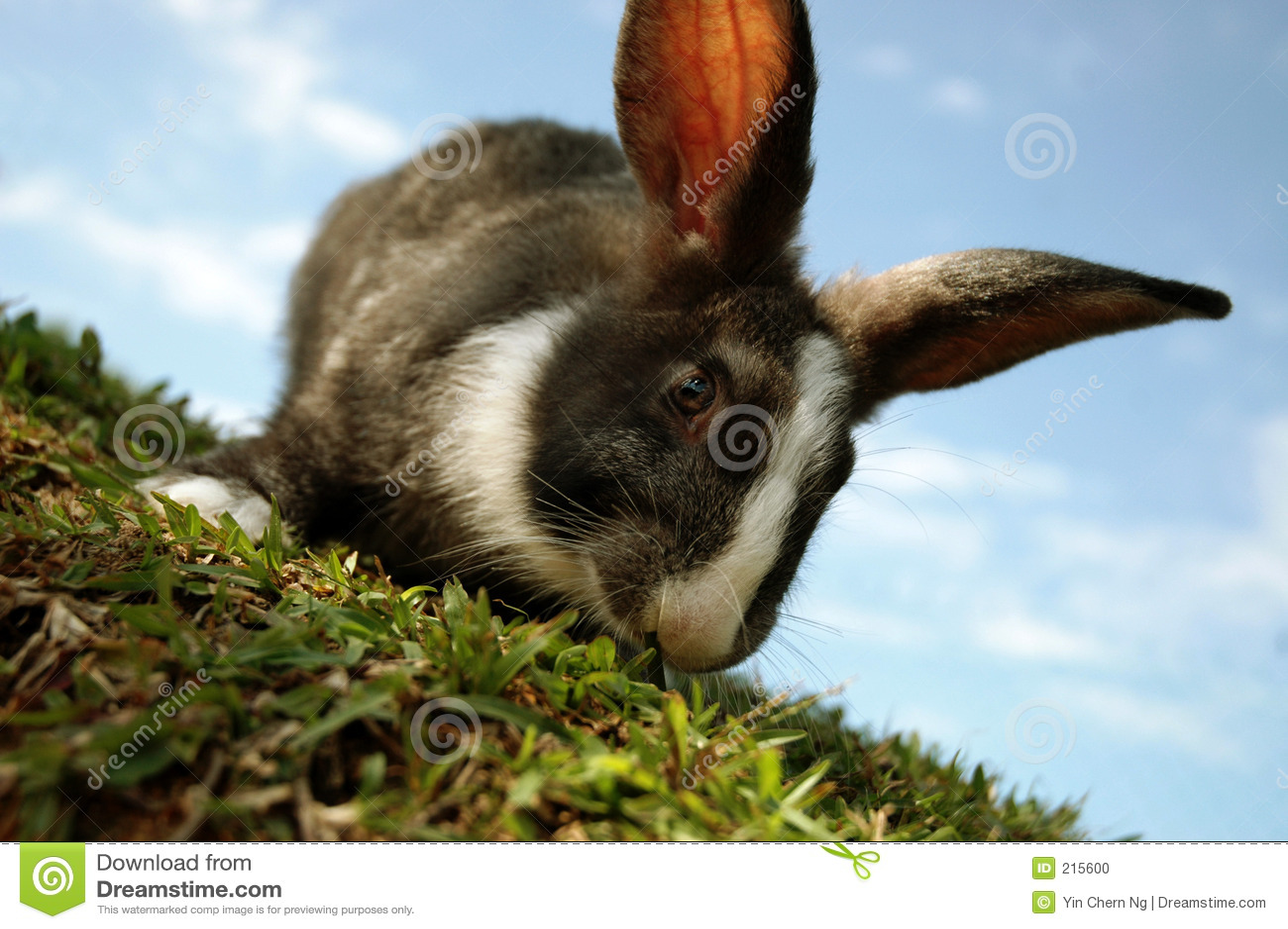 Bunny hill