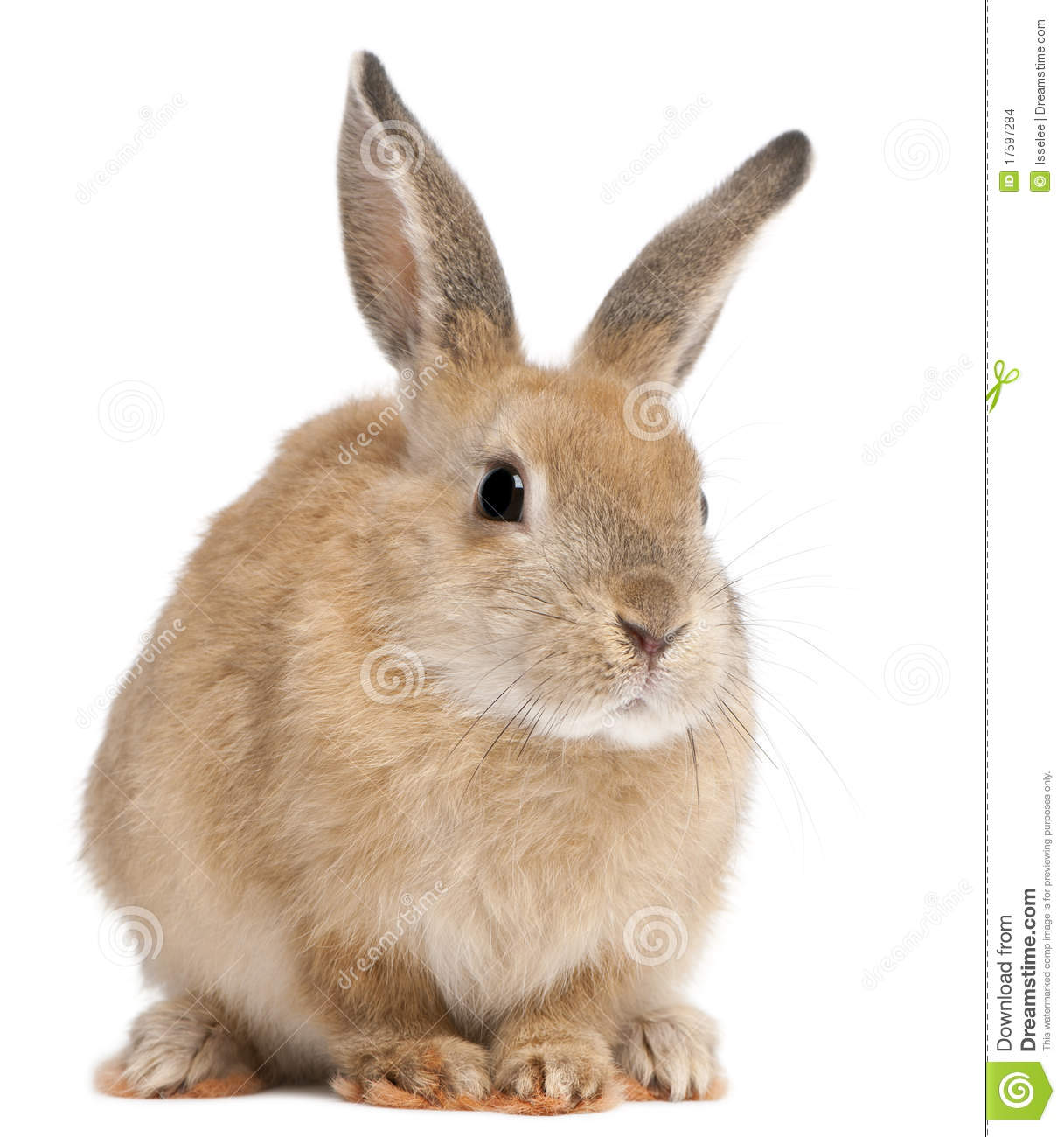 Bunny Rabbit Stock Images - Image: 17597284