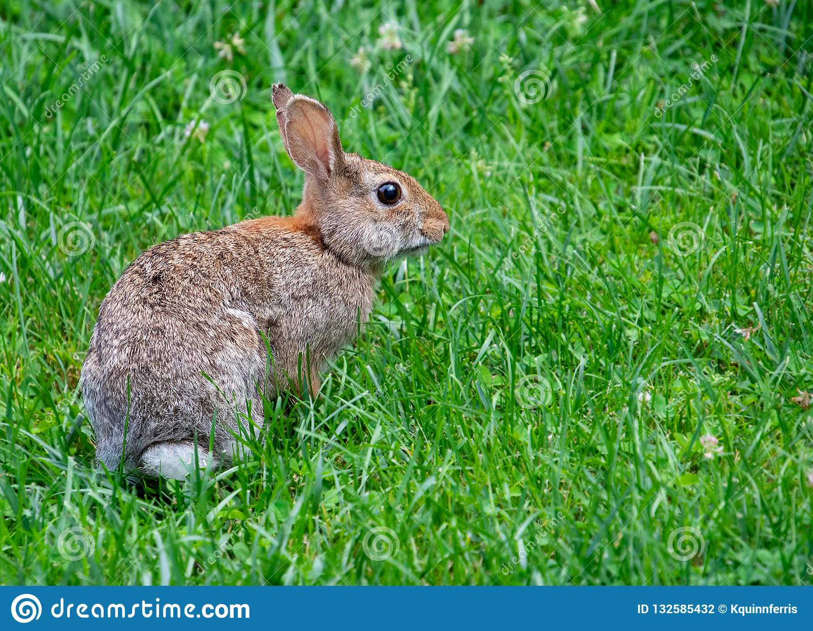 A Bunny Rabbit In The Grass Stock Photo - Image of ...