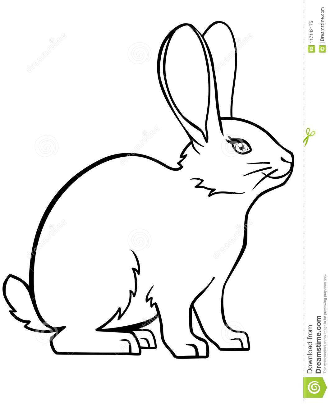 Bunny Rabbit Linear Drawing Of A Bunny Template For Coloring