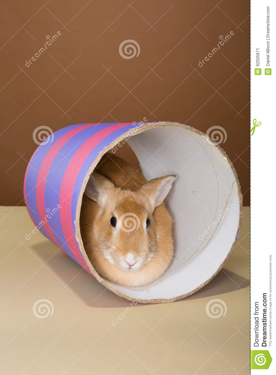 Bunny rabbit posing in a tube in a studio against a cream and brown setting