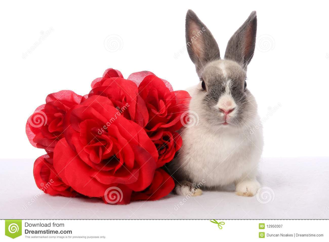 Bunny Rabbit And Roses Royalty Free Stock Photography Image 12950307