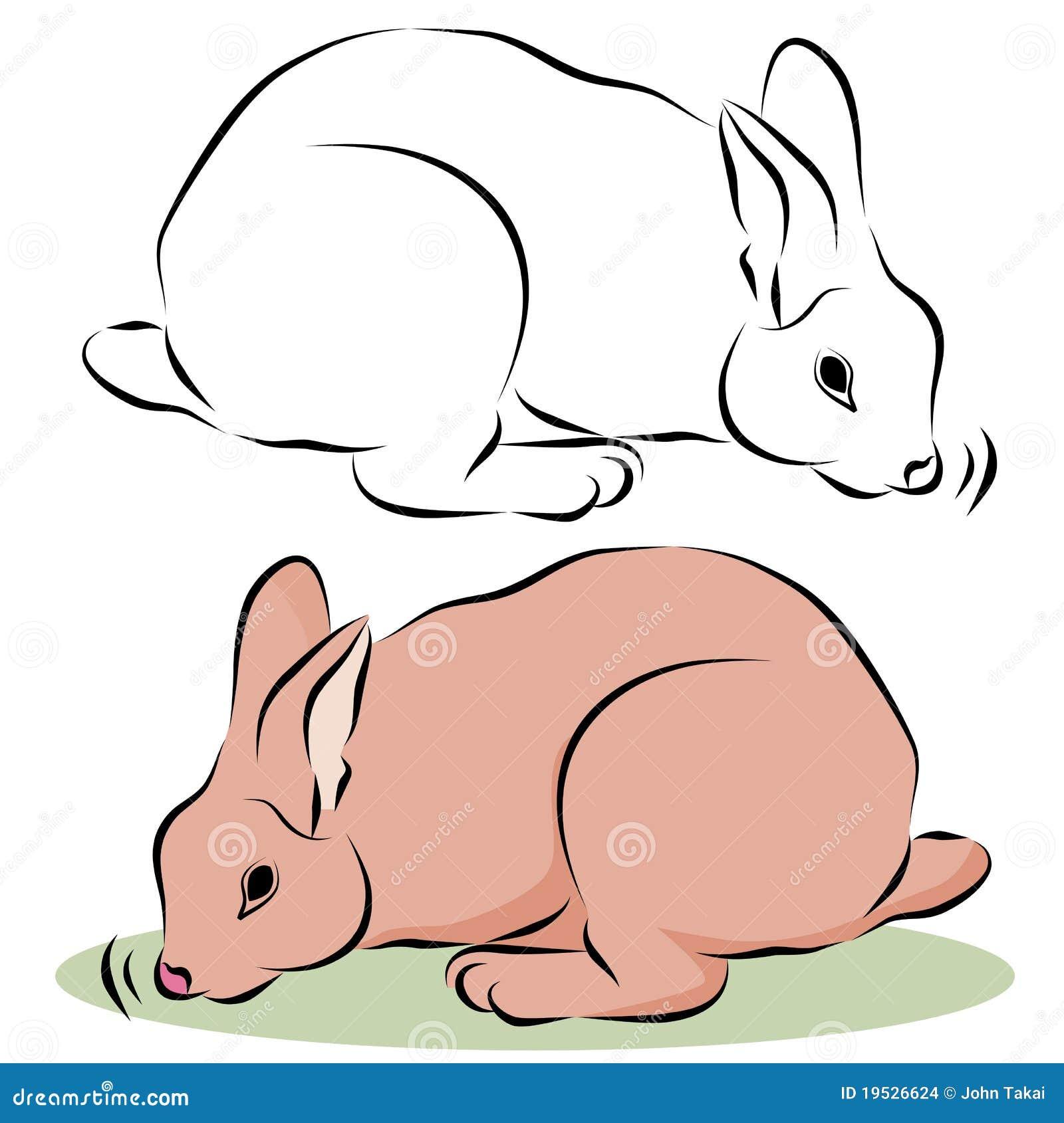 bunny rabbit sniffing around - photo #33