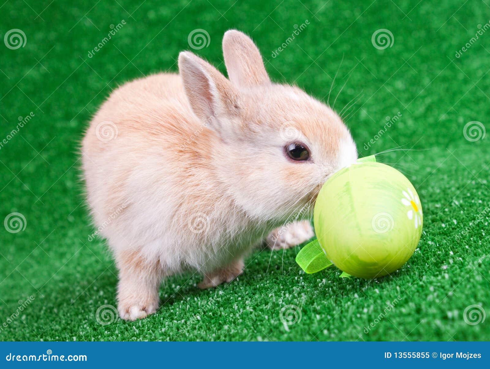 bunny rabbit sniffing around - photo #37