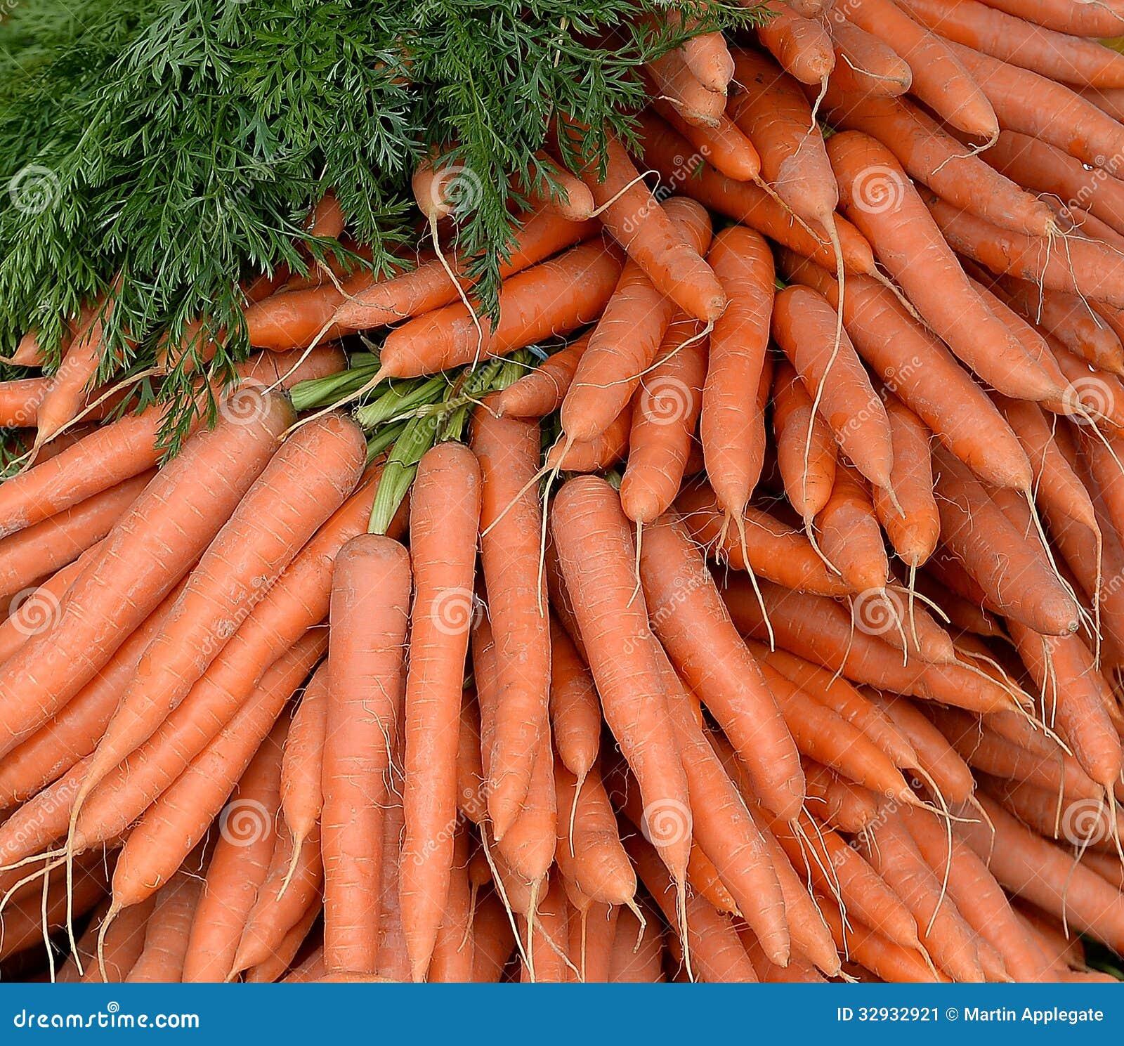 Bunt av nya valda morötter