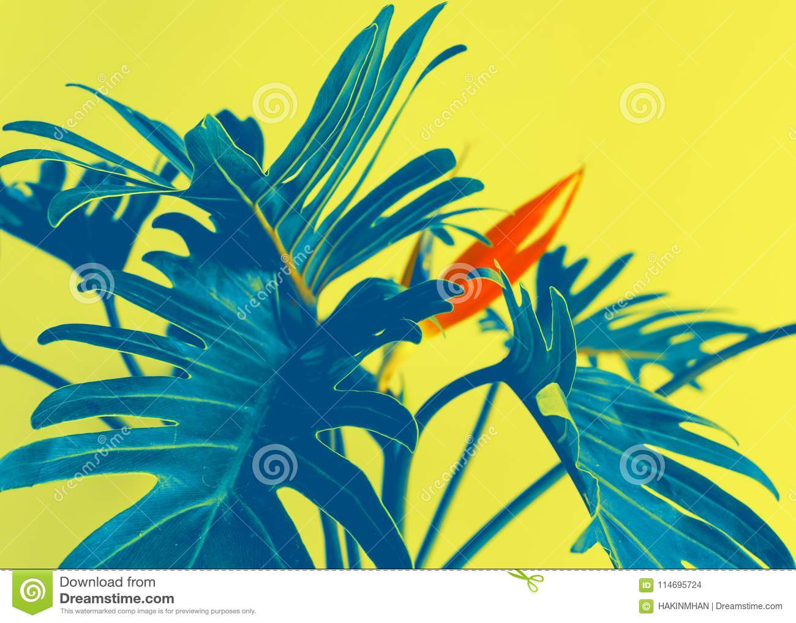 Bunt von exotischen tropischen Blume strelizia und xanadu Blättern