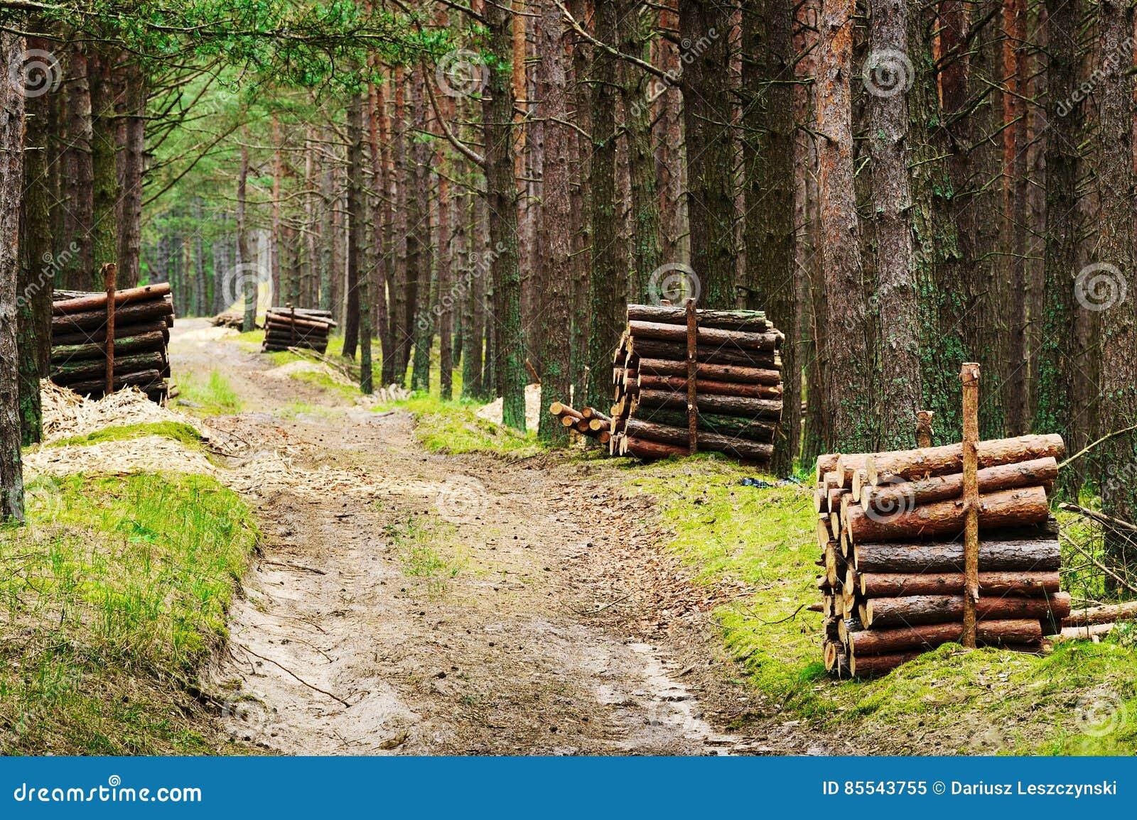 Buntar av avverkat sörjer trädstammar längs vägen i vintergrön barrskog
