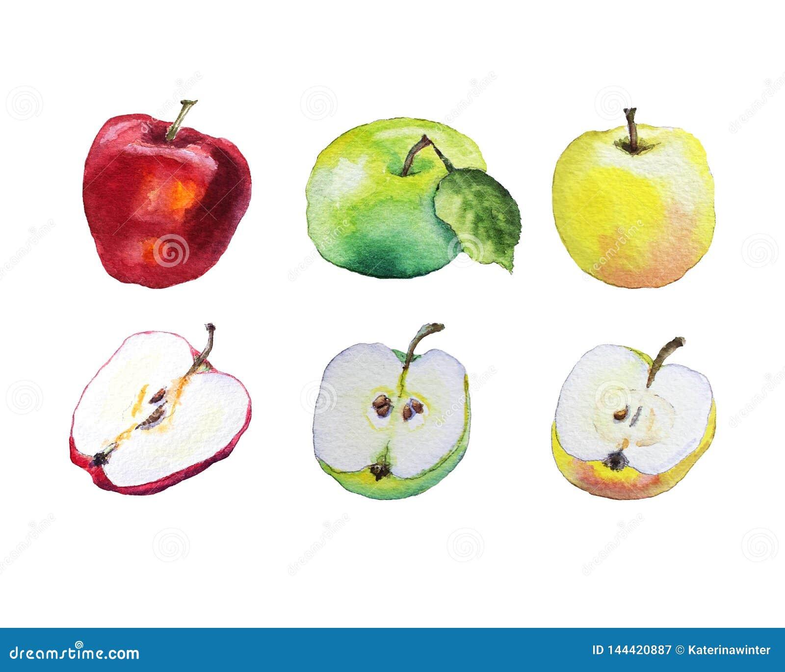 Bunte Äpfel des Aquarells