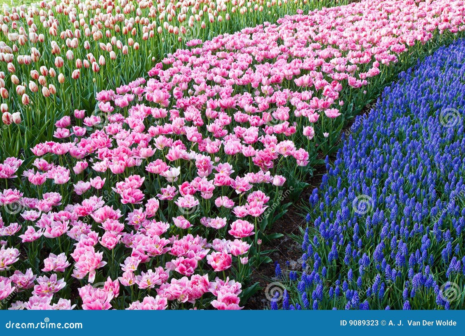 Bunte Anschläge der Blumen