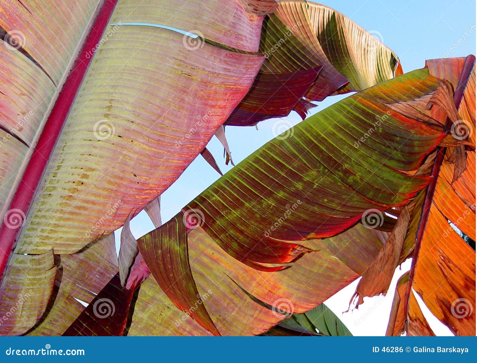 Bunte Bananenblätter