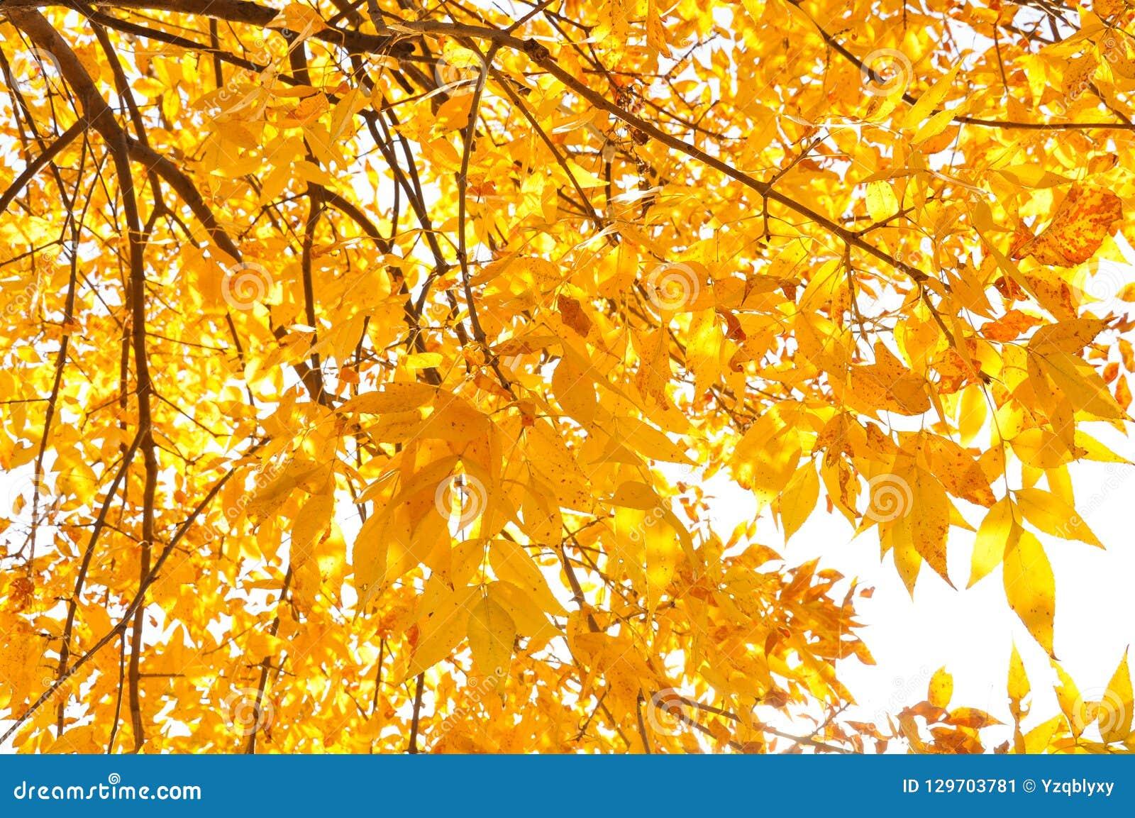 Bunte Blätter im Herbst- und Morgensonnenlicht