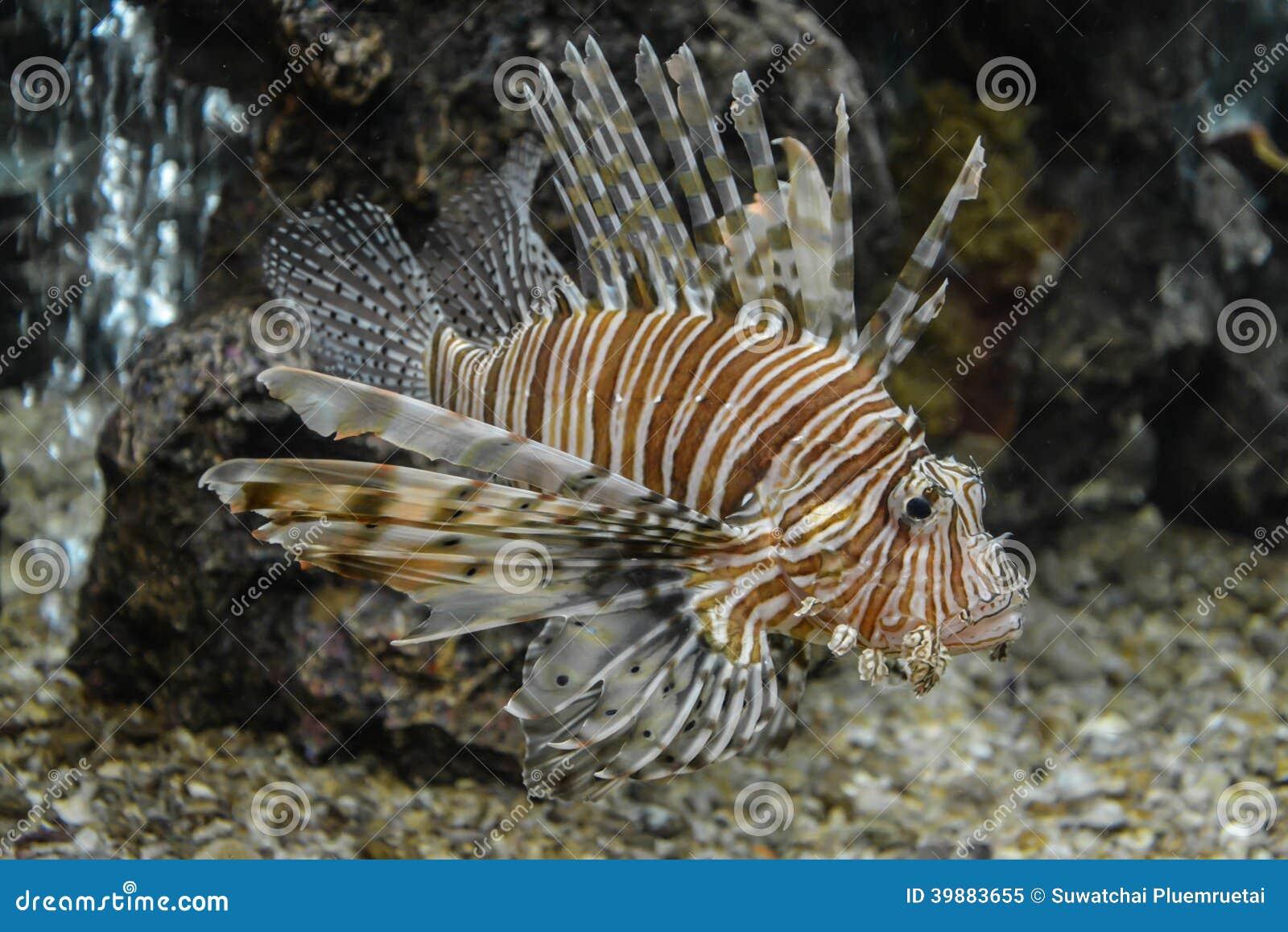bunte fische die im aquarium schwimmen stockfoto bild 39883655. Black Bedroom Furniture Sets. Home Design Ideas