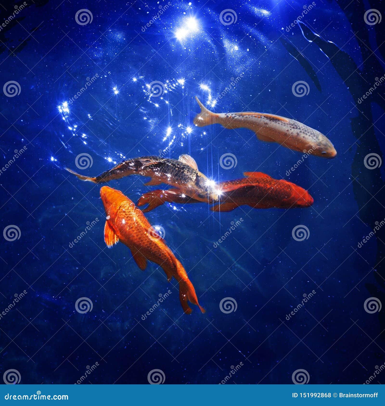 Bunte japanische Karpfen schwimmen im Teichabschluß oben, Goldfische tauchen im blauen glänzenden Wasser, schöne tropische golden