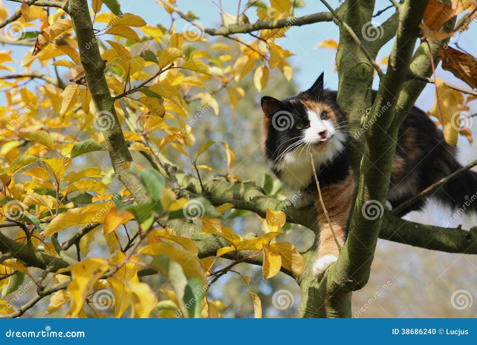bunte katze auf apfelbaum im herbst stockfoto bild 38686240. Black Bedroom Furniture Sets. Home Design Ideas
