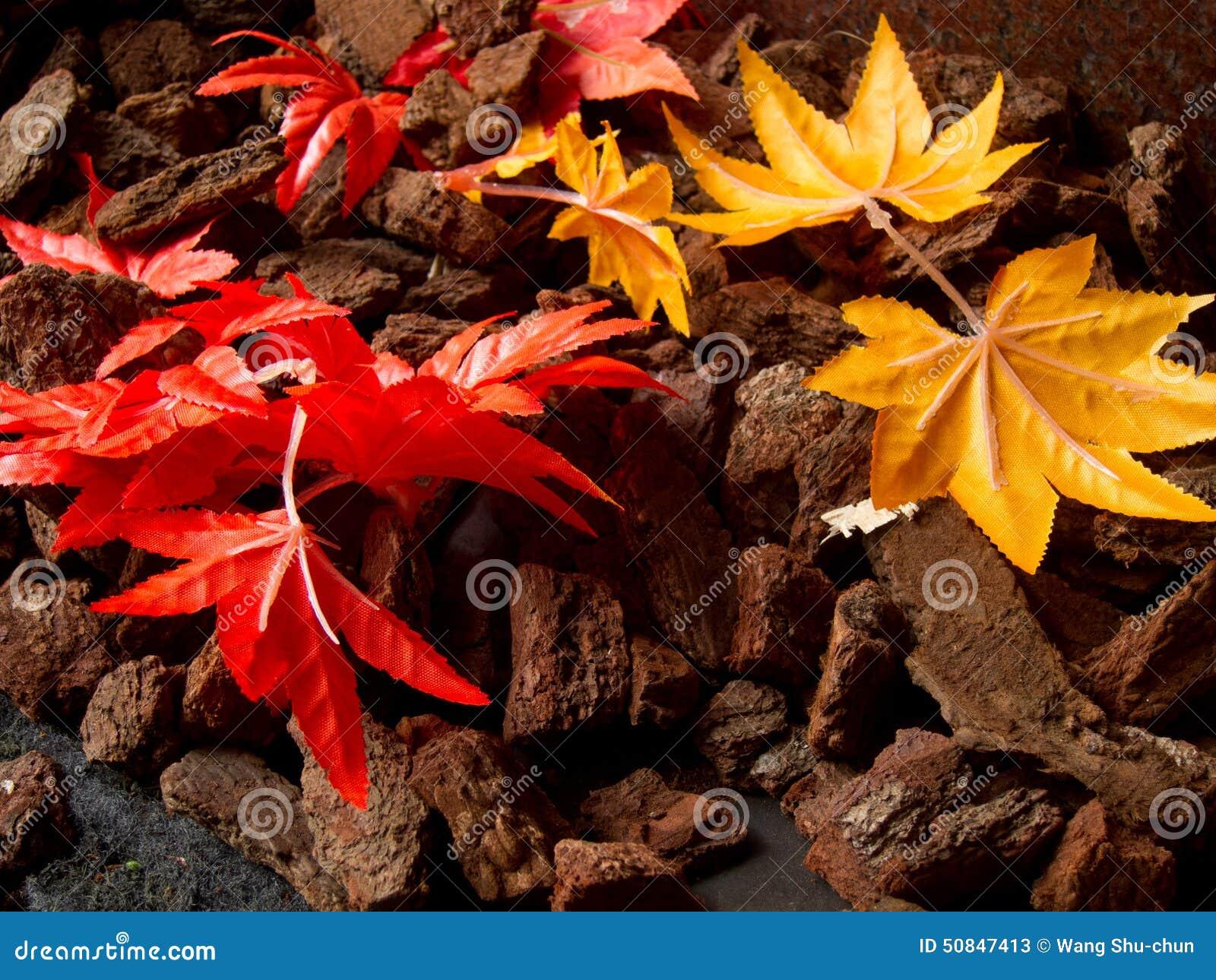 Bunte mapple Blätter