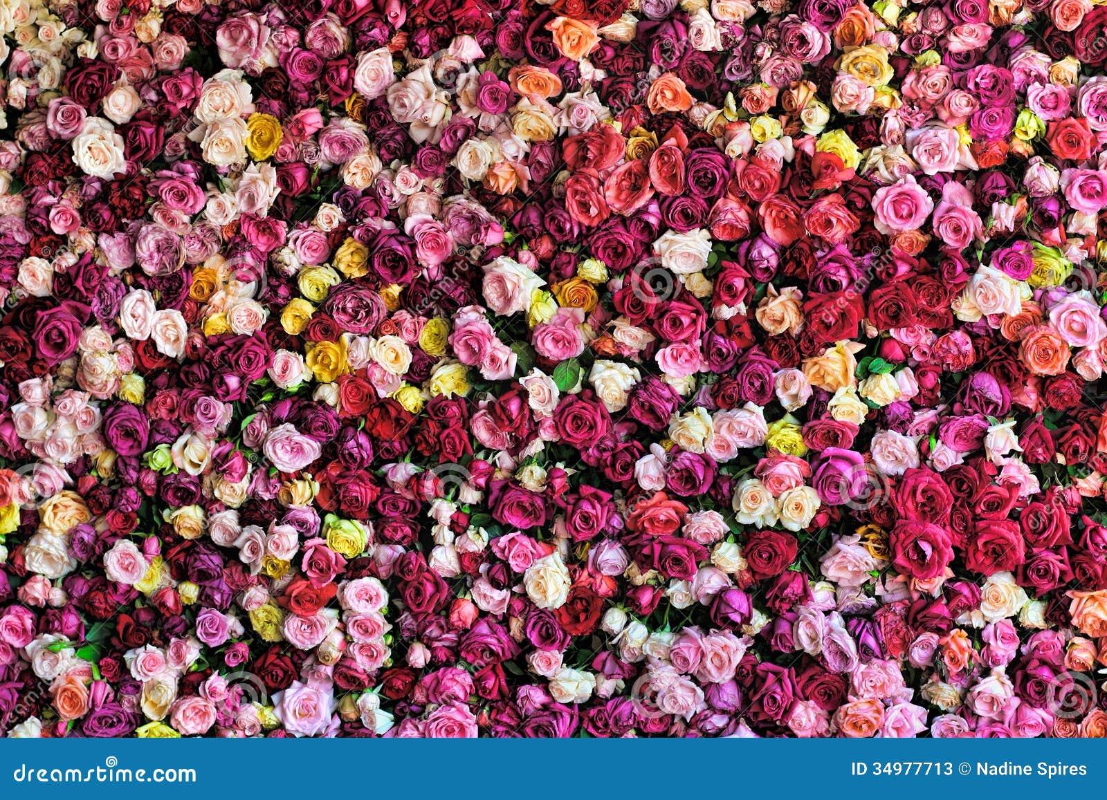 bunte rose background stockbild bild von hintergrund 34977713. Black Bedroom Furniture Sets. Home Design Ideas
