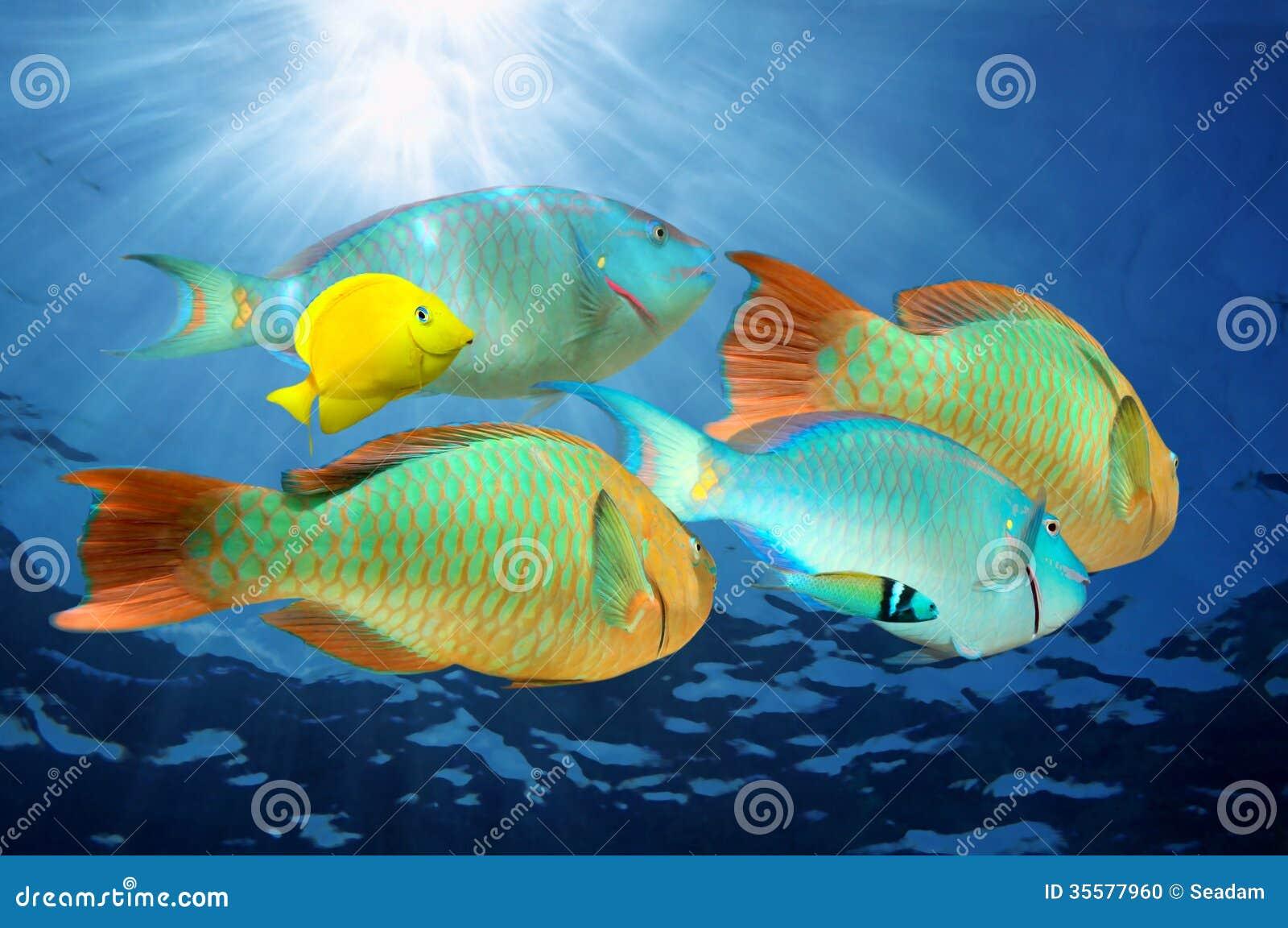 Bunte tropische fische des papageienfisches unter wasser for Bunte goldfische