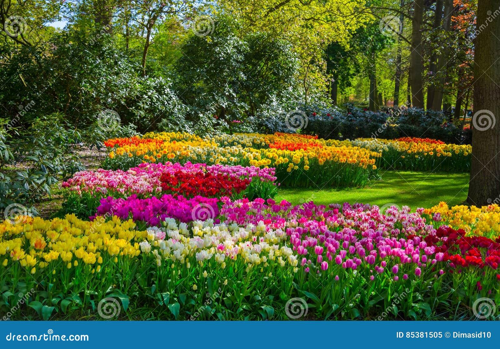 Bunte tulpen im keukenhof arbeiten holland im garten for Garten arbeiten