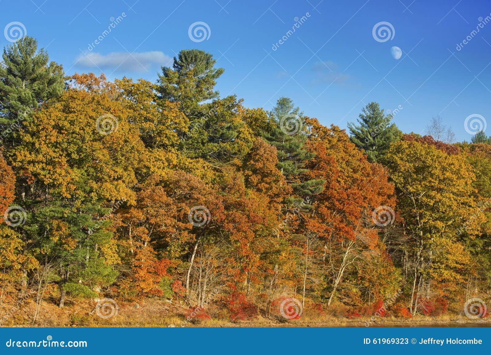 Bunter Herbstlaub mit Moonrise in einem blauen Himmel, Connecticut