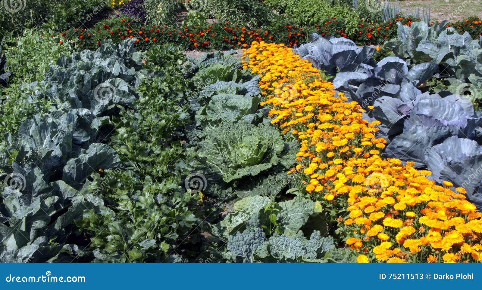 Buntes Gemüsegartenbett