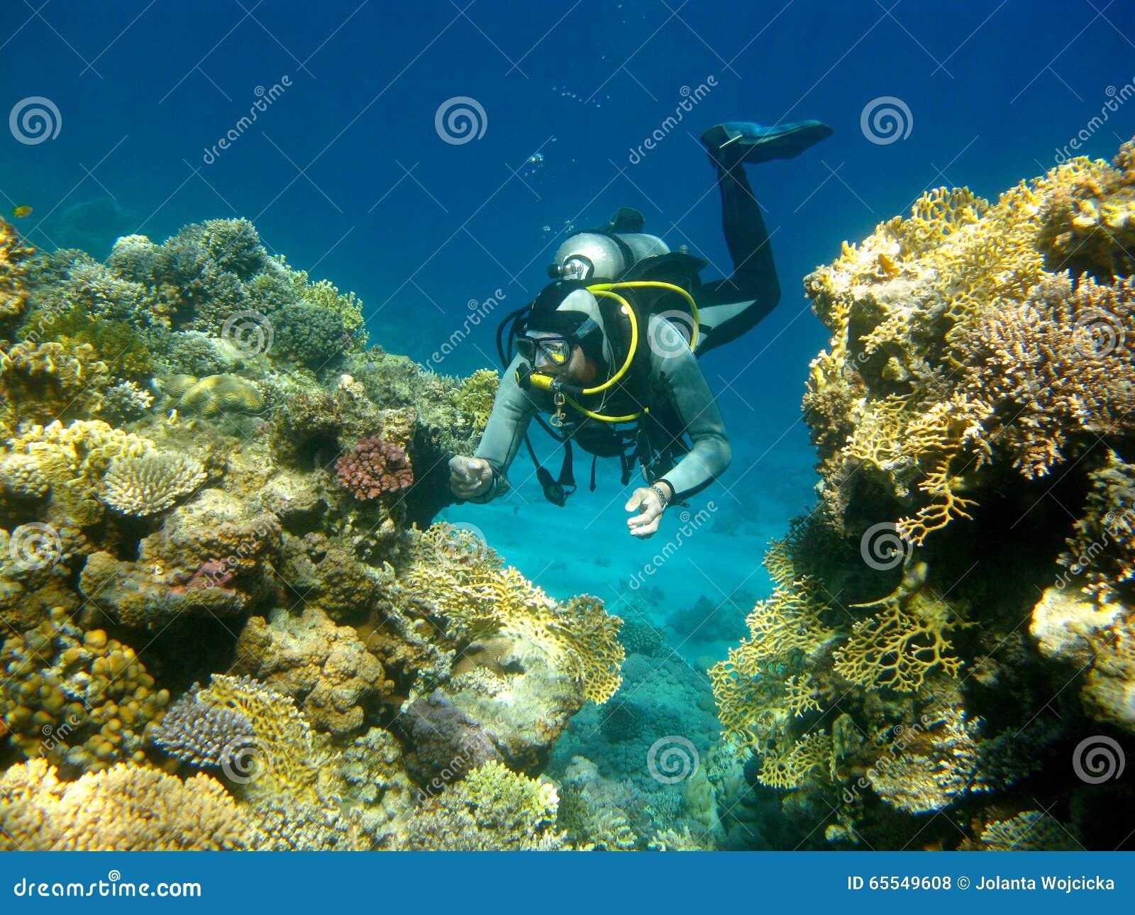 buntes korallenriff und taucher im tropischen meer