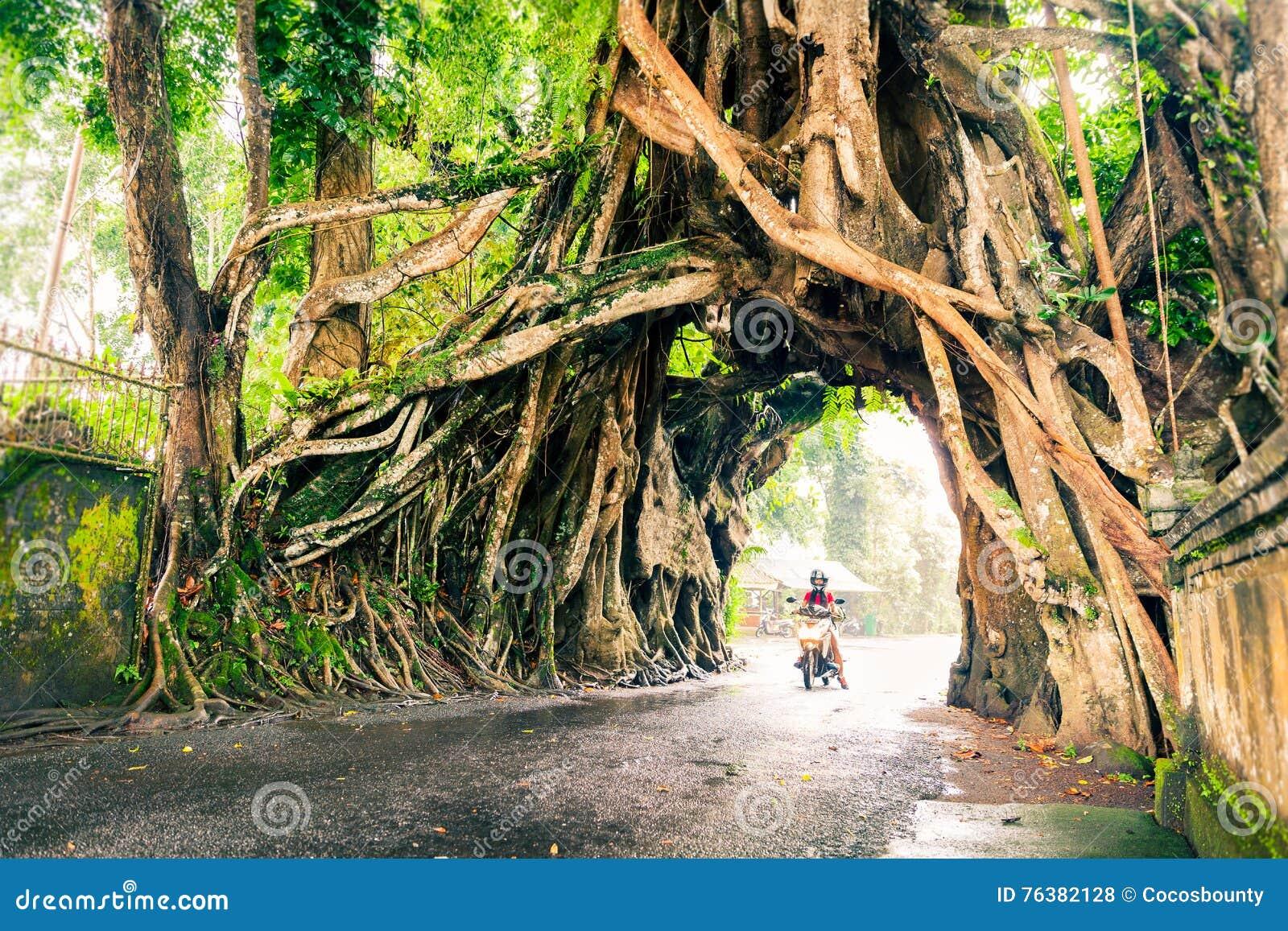 Картинки природы с аркой