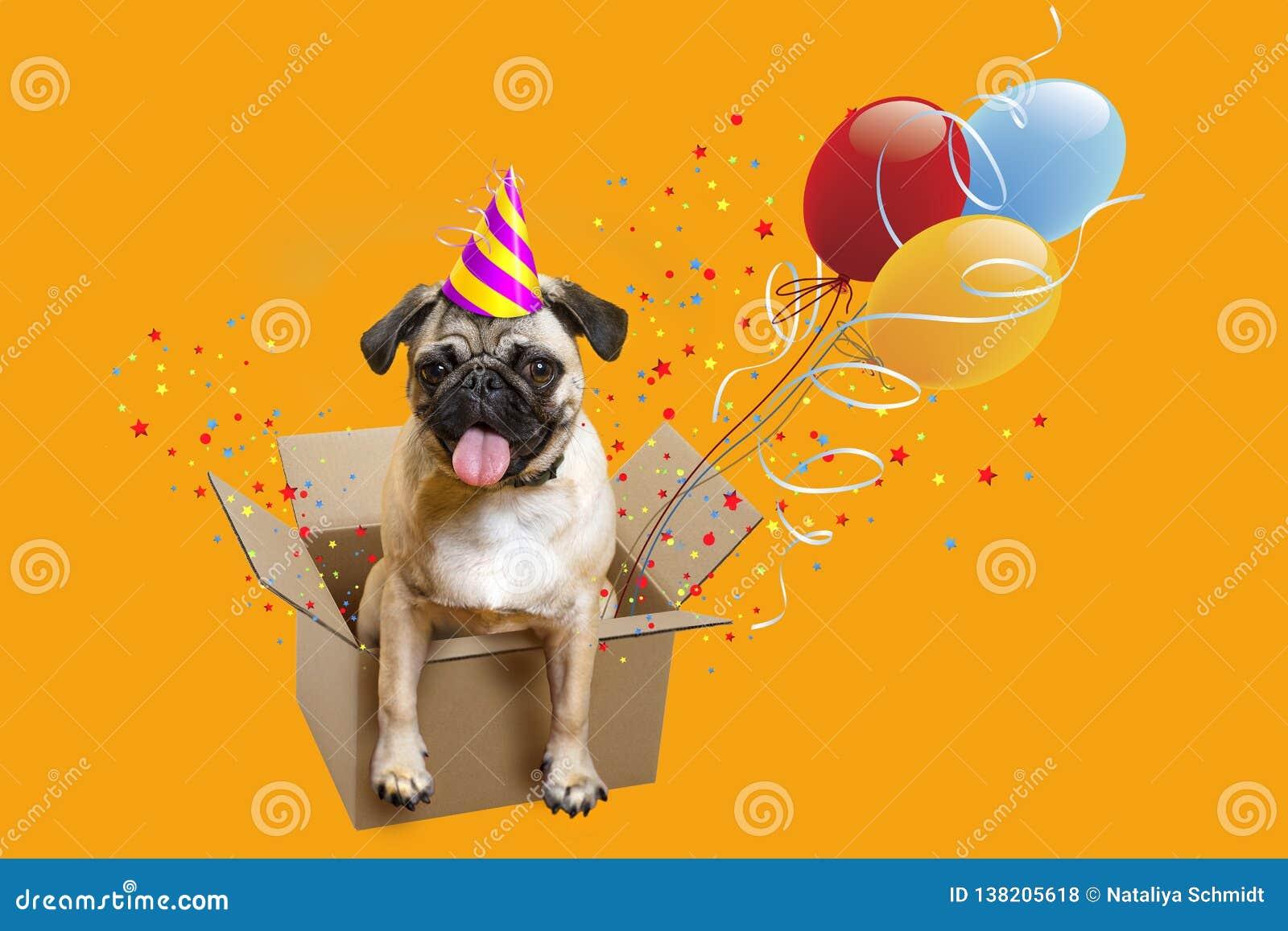 Buon Compleanno Carlino In Una Scatola Palloni Del Cane Fotografia