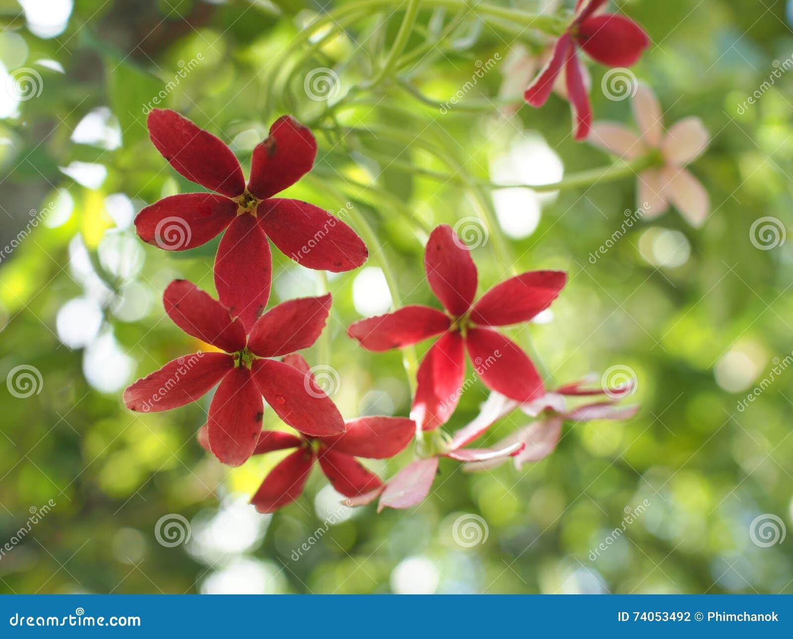 Amato Buongiorno con il mazzo dei fiori foto stock - Iscriviti Gratis WS94
